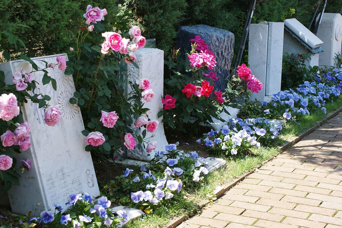 バラに囲まれた明るい墓域