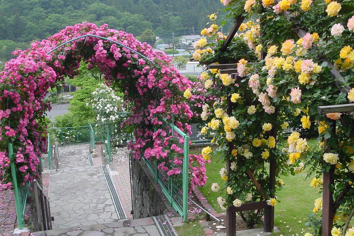 バラのアーチ