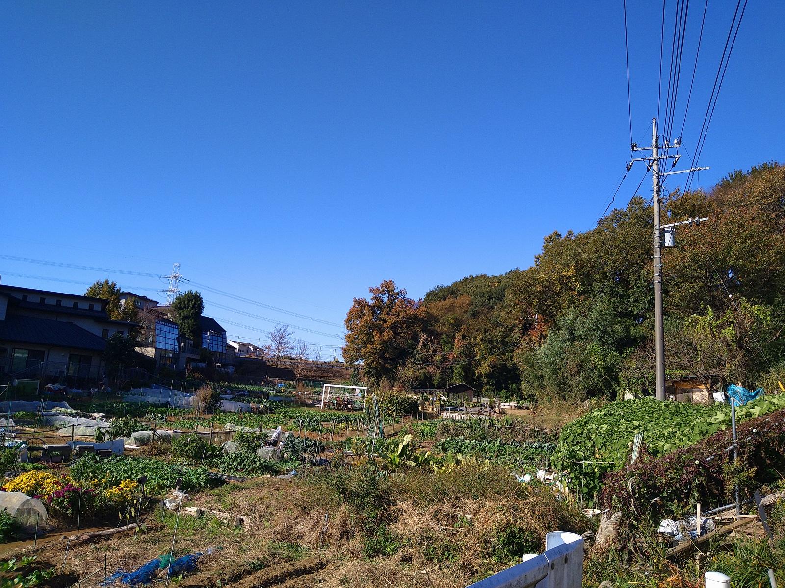 紅葉しています  あざみ野浄苑