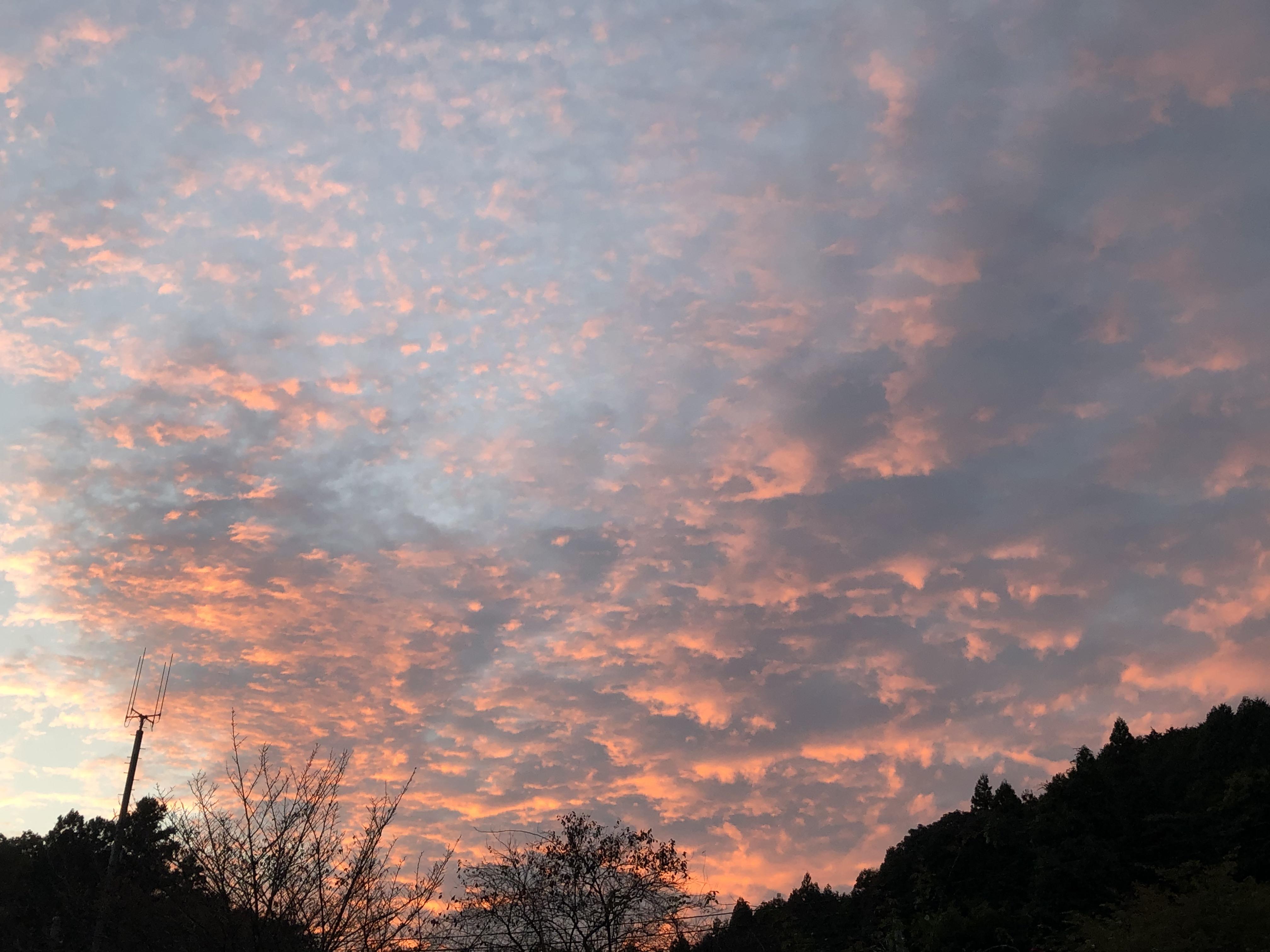 桜色の夕空